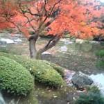 旧古河庭園紅葉